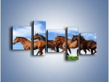 Obraz na płótnie – Galopujące stado brązowych koni – pięcioczęściowy Z172W7