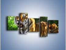 Obraz na płótnie – Cała duma tygrysa – pięcioczęściowy Z199W7