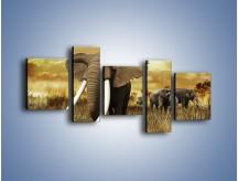 Obraz na płótnie – Drogocenne kły słonia – pięcioczęściowy Z214W7