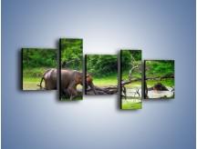 Obraz na płótnie – Kąpiel ze słoniem – pięcioczęściowy Z216W7