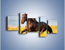 Obraz na płótnie – Dziki koń i jego mięśnie – pięcioczęściowy Z232W7