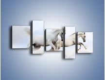 Obraz na płótnie – Białe konie i biały śnieg – pięcioczęściowy Z239W7