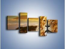 Obraz na płótnie – Dojrzały wiek lwa – pięcioczęściowy Z303W7