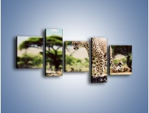 Obraz na płótnie – Cała zwinność geparda – pięcioczęściowy Z315W7