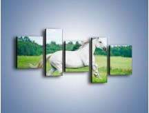 Obraz na płótnie – Biały koń i leśna polana – pięcioczęściowy Z317W7
