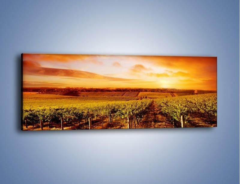 Obraz na płótnie – Ziemia i uprawy – jednoczęściowy panoramiczny KN673