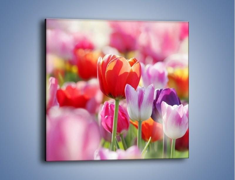 Obraz na płótnie – Boso przez tulipany – jednoczęściowy kwadratowy K344