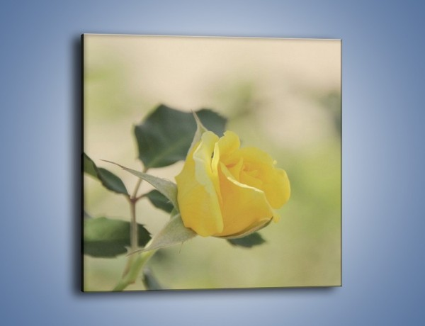 Obraz na płótnie – Cytryna odbita w róży – jednoczęściowy kwadratowy K347