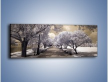 Obraz na płótnie – Parkowa aleja w sepii – jednoczęściowy panoramiczny KN734