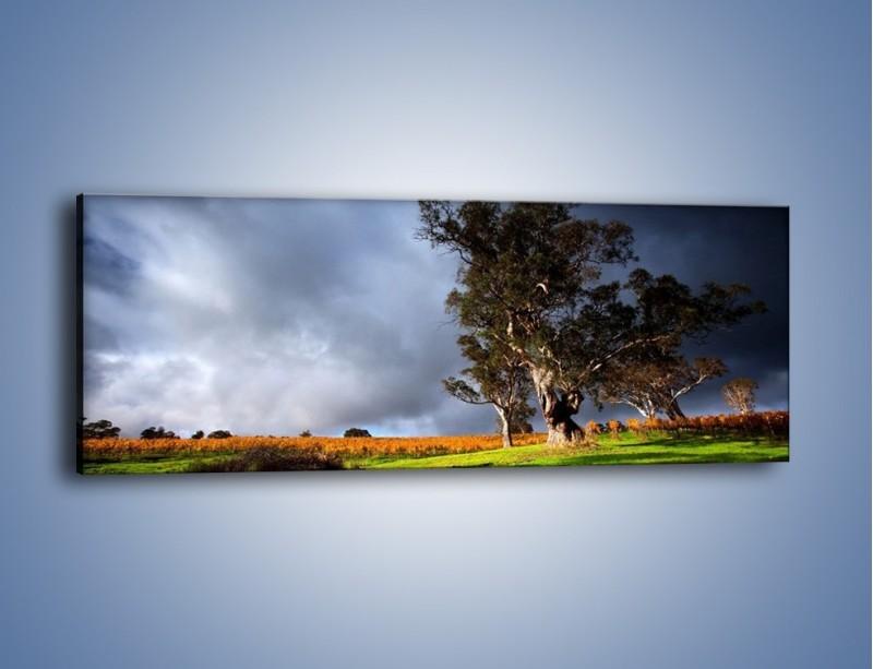 Obraz na płótnie – Burzowe chmury nad polaną – jednoczęściowy panoramiczny KN748