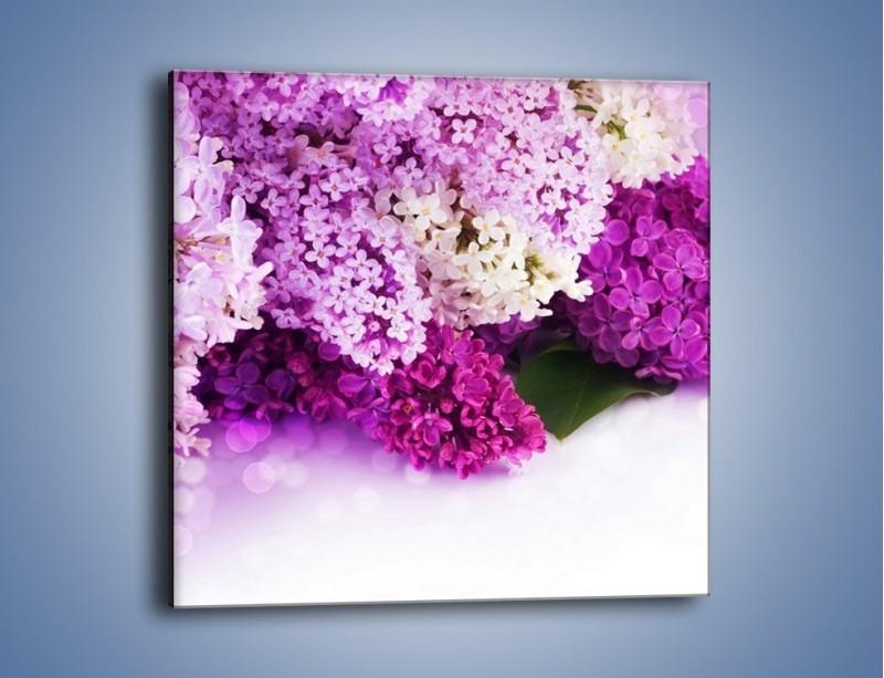 Obraz na płótnie – Bez w różnych kolorach – jednoczęściowy kwadratowy K389