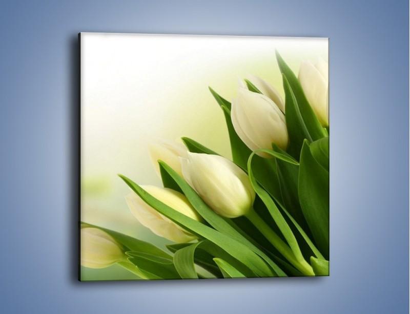 Obraz na płótnie – Białe tulipany na zgodę – jednoczęściowy kwadratowy K400