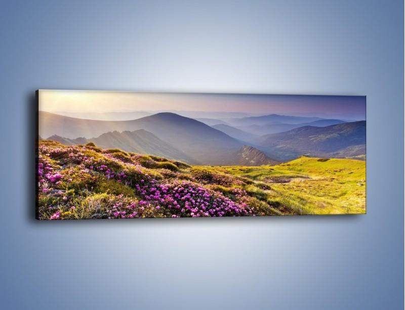 Obraz na płótnie – Górka z malutkimi kwiatuszkami – jednoczęściowy panoramiczny KN795