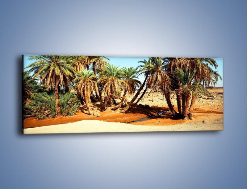 Obraz na płótnie – Palmowa rodzina w komplecie – jednoczęściowy panoramiczny KN809