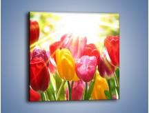 Obraz na płótnie – Bajecznie słoneczne tulipany – jednoczęściowy kwadratowy K428