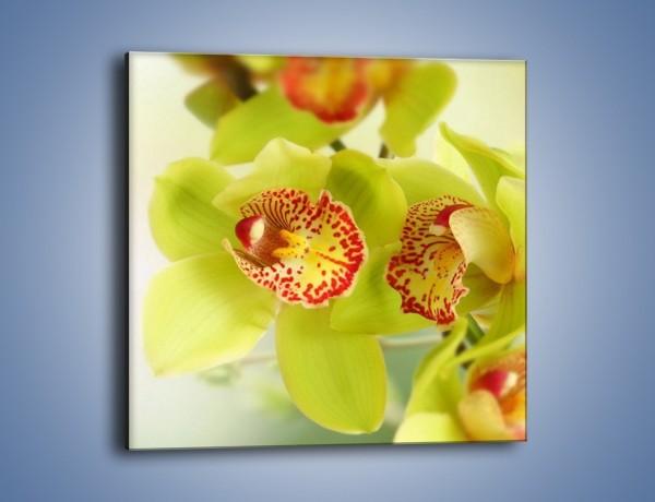 Obraz na płótnie – Limonkowy kwiat – jednoczęściowy kwadratowy K447