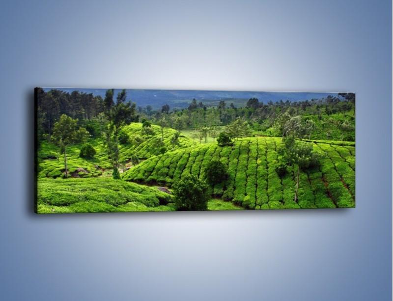 Obraz na płótnie – Rozległa zielona kraina – jednoczęściowy panoramiczny KN872