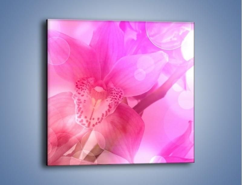 Obraz na płótnie – Budzący dzień w różowym kwiecie – jednoczęściowy kwadratowy K487