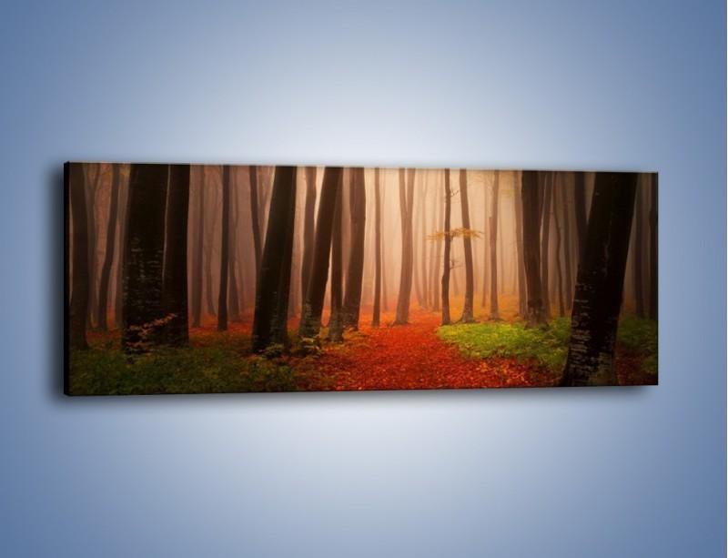 Obraz na płótnie – Las pełen tajemnic – jednoczęściowy panoramiczny KN909