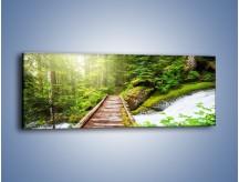 Obraz na płótnie – Bezpieczna droga przez las – jednoczęściowy panoramiczny KN922