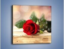 Obraz na płótnie – Stęskniona róża – jednoczęściowy kwadratowy K505