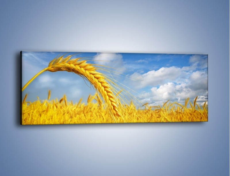 Obraz na płótnie – Pole pełne złota – jednoczęściowy panoramiczny KN962