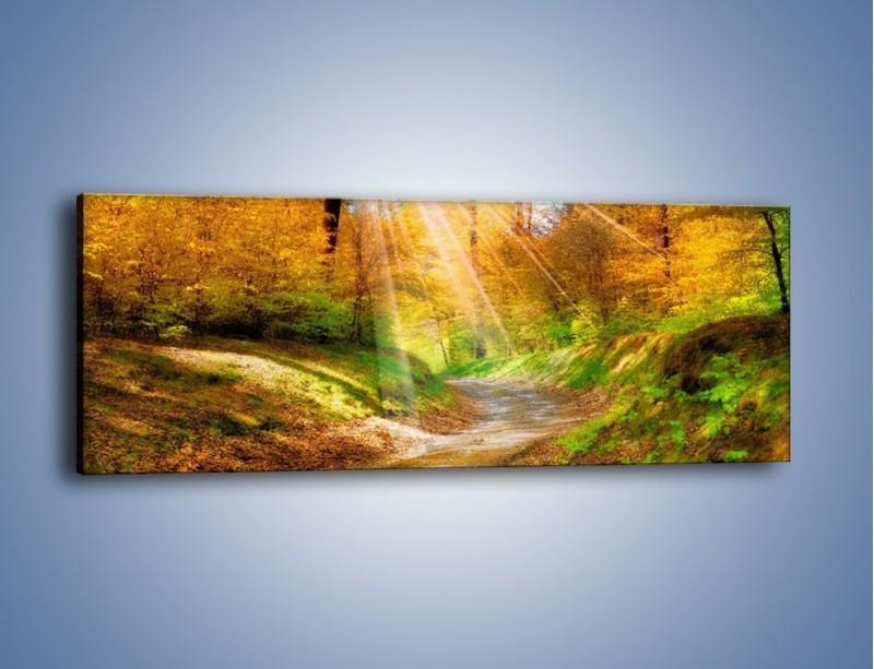 Obraz na płótnie – Promienną i słoneczną ścieżką przez las – jednoczęściowy panoramiczny KN989