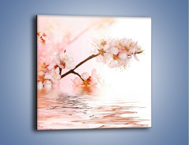 Obraz na płótnie – Blask kwiatów jabłoni – jednoczęściowy kwadratowy K569