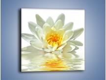 Obraz na płótnie – Biel z pomarańczą w kwiecie – jednoczęściowy kwadratowy K674