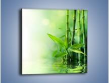 Obraz na płótnie – Bambusowe łodygi w roli głównej – jednoczęściowy kwadratowy K704