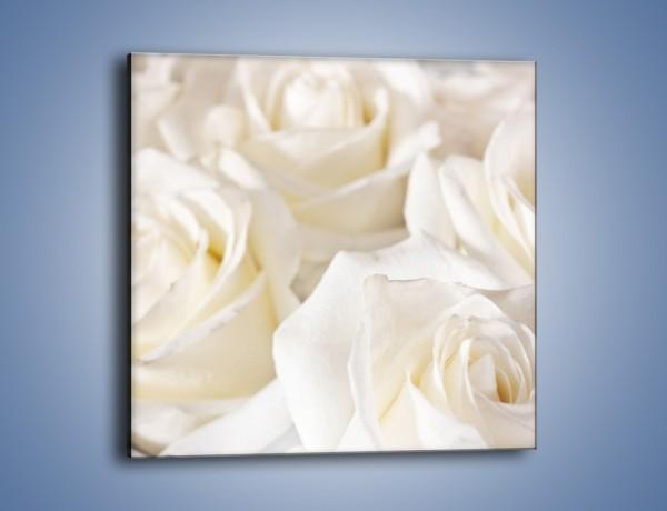 Obraz na płótnie – Dywan z białych róż – jednoczęściowy kwadratowy K711