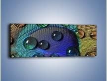 Obraz na płótnie – Kropelki na pawim oku – jednoczęściowy panoramiczny O047