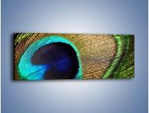 Obraz na płótnie – Cudowne pawie oko – jednoczęściowy panoramiczny O048