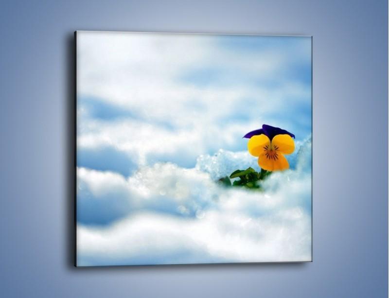 Obraz na płótnie – Bratek na śnieżnym niebie – jednoczęściowy kwadratowy K744