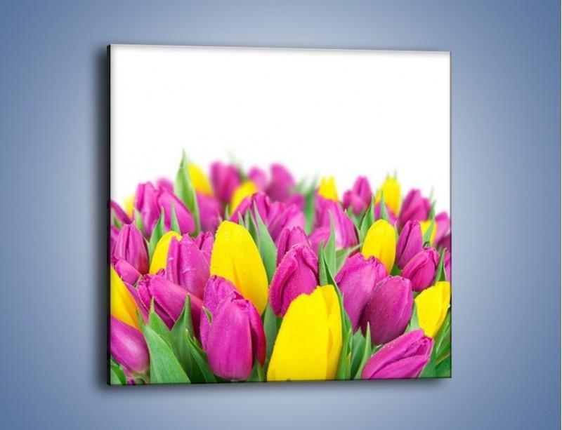 Obraz na płótnie – Bukiet fioletowo-żółtych tulipanów – jednoczęściowy kwadratowy K778