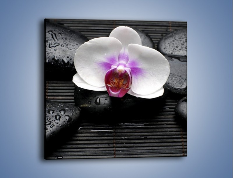 Obraz na płótnie – Biały kwiat na ciemnej macie – jednoczęściowy kwadratowy K874