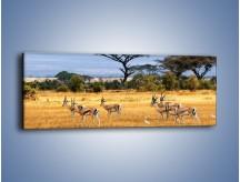 Obraz na płótnie – Antylopy w słonecznej afryce – jednoczęściowy panoramiczny Z003