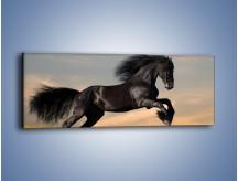 Obraz na płótnie – Czarny koń w galopie – jednoczęściowy panoramiczny Z008