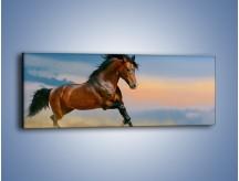 Obraz na płótnie – Brązowy koń na pustyni – jednoczęściowy panoramiczny Z011