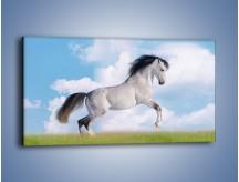 Obraz na płótnie – Białe obłoki i koń – jednoczęściowy panoramiczny Z019