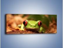 Obraz na płótnie – Bystre oczka małej żabki – jednoczęściowy panoramiczny Z023