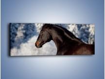Obraz na płótnie – Brązowy ogier na zimowym spacerze – jednoczęściowy panoramiczny Z056