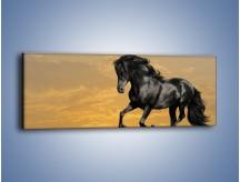 Obraz na płótnie – Bieg z koniem po polanie – jednoczęściowy panoramiczny Z057