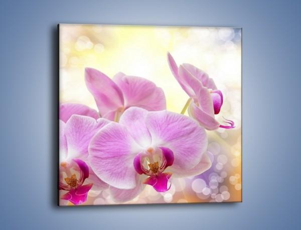 Obraz na płótnie – Lila kwiaty o poranku – jednoczęściowy kwadratowy K976