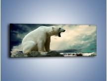 Obraz na płótnie – Donośny krzyk polarnego niedźwiedzia – jednoczęściowy panoramiczny Z114