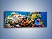 Obraz na płótnie – Fauna i kolorowi towarzysze – jednoczęściowy panoramiczny Z116