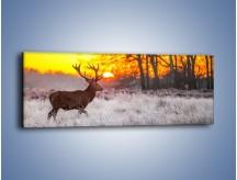 Obraz na płótnie – Jeleń o zachodzie słońca – jednoczęściowy panoramiczny Z164