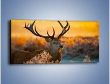 Obraz na płótnie – Ciężkie poroże jelenia – jednoczęściowy panoramiczny Z165