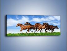 Obraz na płótnie – Galopujące stado brązowych koni – jednoczęściowy panoramiczny Z172
