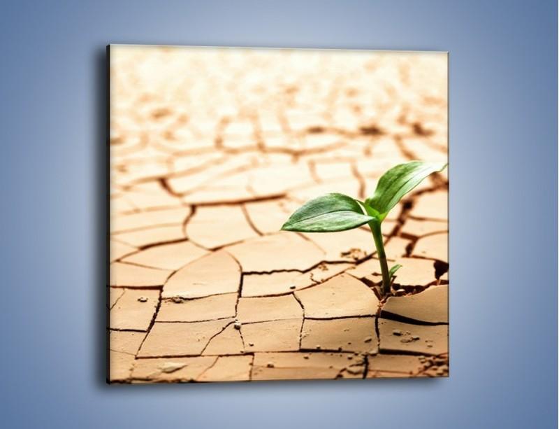 Obraz na płótnie – Łodyga w spękanej ziemi – jednoczęściowy kwadratowy KN013